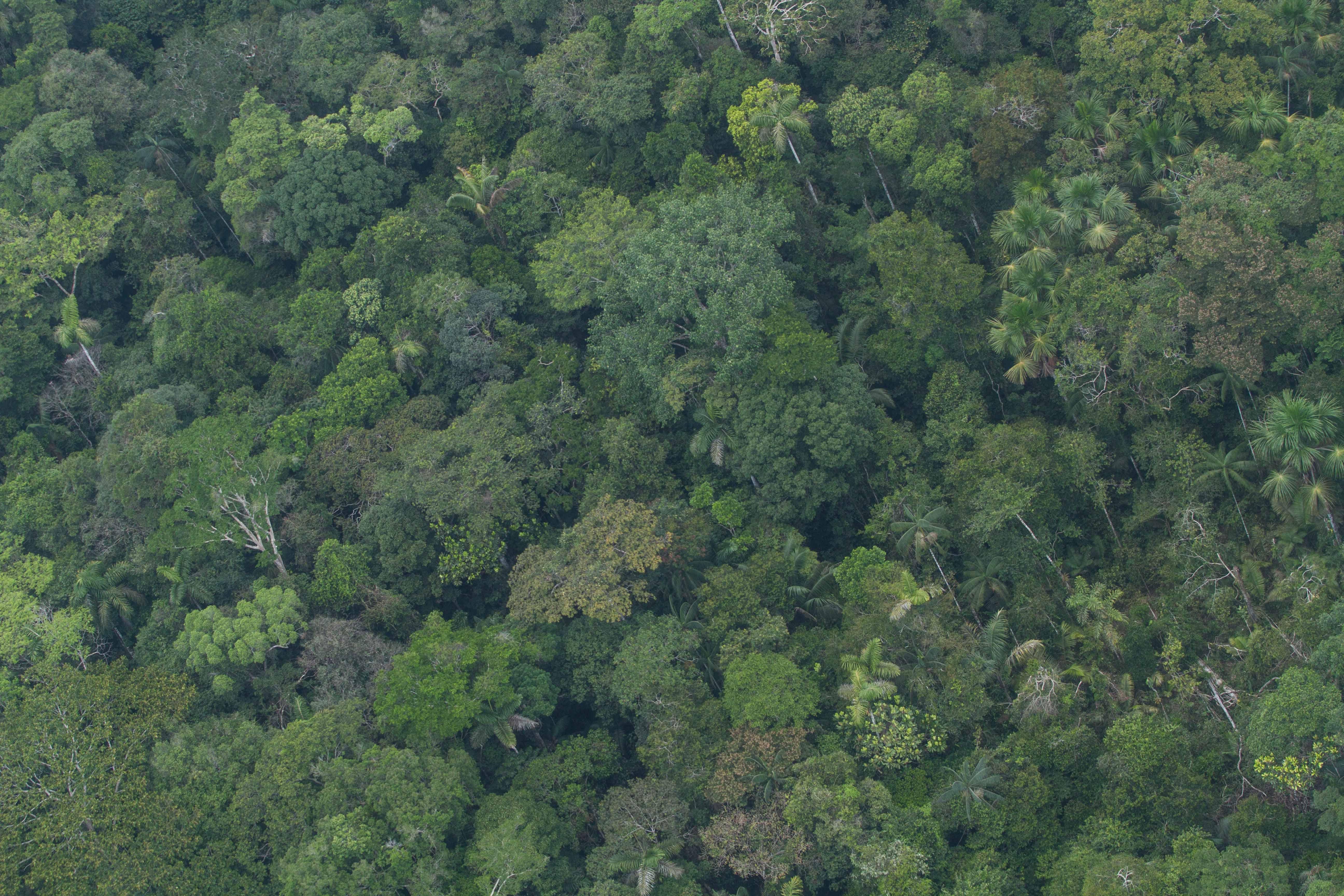 CEDIA Opina: Los Bosques en el Perú: Aportes de CEDIA para su protección